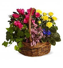 Plants: Blooming Garden Basket